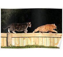 Tabby cat chasing ginger on garden fence Poster