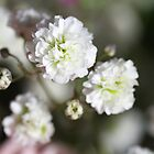 Baby's Breath by rom01