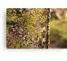 But Who Wants Moss Canvas Print