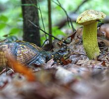 The Story of the Turtle and the Mushroom. . . by ChuckBuckner