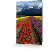 Tulips at the foot of the mountain. Greeting Card