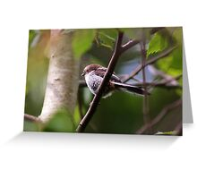 Long Tailed Tit fledgling II Greeting Card
