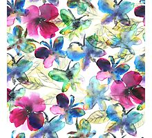 Floral Butterflies Photographic Print