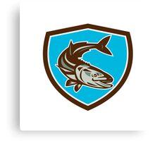 Cobia Fish Diving Down Shield Retro Canvas Print