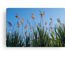 Towering Grasses Canvas Print