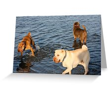 Issy,Alfy and friend Greeting Card
