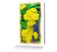 Trombley-Centre House - Herb Garden Greeting Card