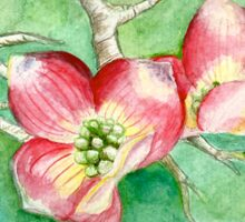 Dogwood Blossoms Sticker