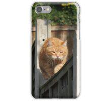 Ginger cat on garden fence iPhone Case/Skin