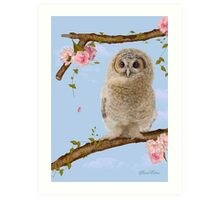 Fledgling Owl in the Cherry Blossom Art Print