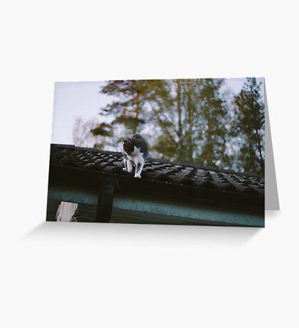 Rooftop adventures with Zelda Greeting Card