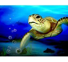 Sea Turtle Encounter Photographic Print