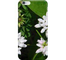 Crown Vetch iPhone Case/Skin