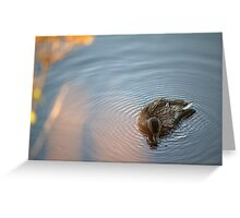 Serenity the Duck Greeting Card