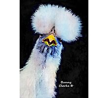 Fancy Chickens:  Who Got First Place?!  That Hussy! Photographic Print