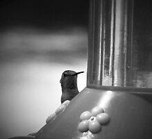 Peeking Out by Corri Gryting Gutzman