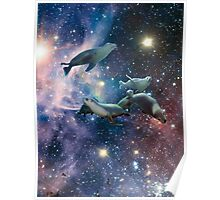 Sea lions in space Poster