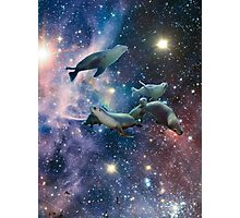Sea lions in space Photographic Print