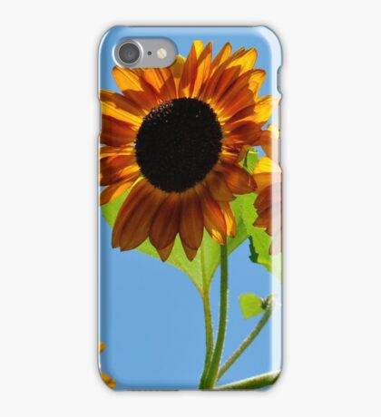 Southern Sky Sunflower iPhone Case/Skin
