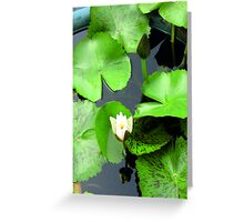 flower / green /water /nature / white Greeting Card