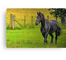 Friesian Horse (Colour version) Canvas Print