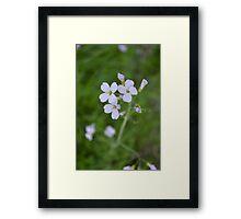 Purple Blossoms Framed Print