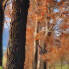 Autumn © Vicki Ferrari by Vicki Ferrari
