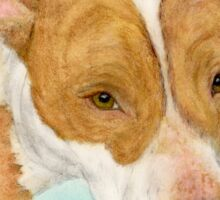 Red Nosed Pit Bull Dog Cathy Peek Animal Art Sticker