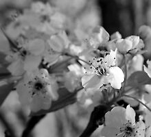 Spring Blossoms by Tony Wilder