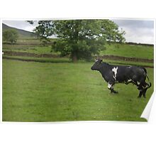 The Charging Cow Poster