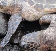 Turtles Sticker