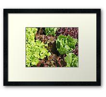 Vegetable Garden: Lettuce Galore Framed Print