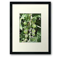 Vegetable Garden: Tomatoes Framed Print