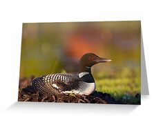 Common loon on nest Greeting Card