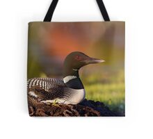 Common loon on nest Tote Bag