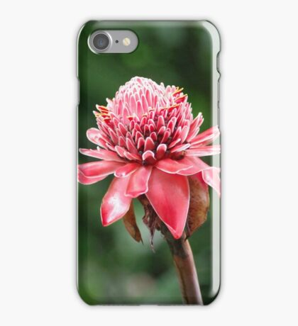 costa rica emperor's torch iPhone Case/Skin