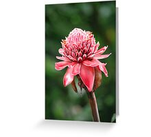 costa rica emperor's torch Greeting Card
