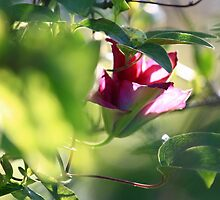 Clematis Bud- Jupiter 9 Bokeh on EOS7D by Mark Haynes Photography