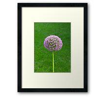 Nature's Beauty: Purple Puff Framed Print