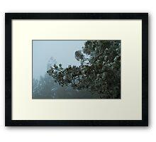Horizontal Hail Pine Tree Framed Print