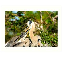 Great Blue Herons Adult with Young Art Print