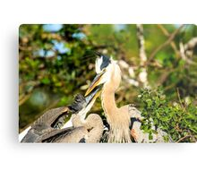 Great Blue Herons Adult with Young Metal Print