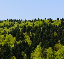 Forest background by Stanciuc