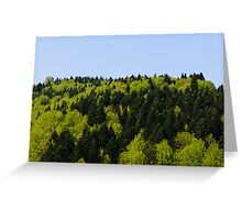 Forest background Greeting Card