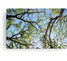 Tree foliage Metal Print