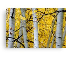 Branches 3 Canvas Print