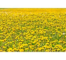 Beautiful countryside landscape in Transylvania, with green grass and dandelions Photographic Print