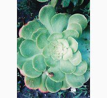 Succulents and snails Unisex T-Shirt