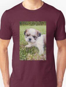 Shitzu Dog Unisex T-Shirt
