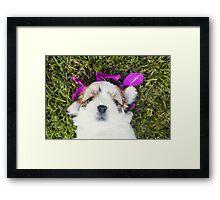Shitzu Dog Framed Print